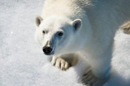 День 8-10.  Исследуем острова Русской Арктики